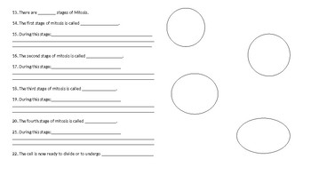 Cell Cycle, DNA replication and mitosis graphic organizer