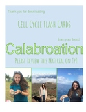 Cell Cycle Flash Cards
