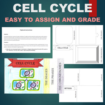 Cell Cycle Flipbook - Mitosis