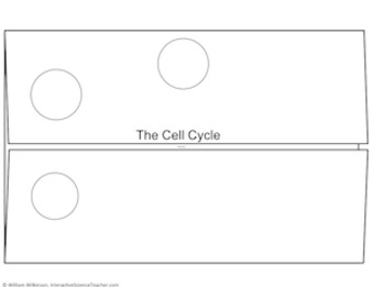 Cell Cycle Graphic Organizer- Cell Cycle And Mitosis