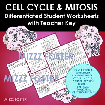 Cell Cycle And Mitosis Worksheets Teaching Resources TpT