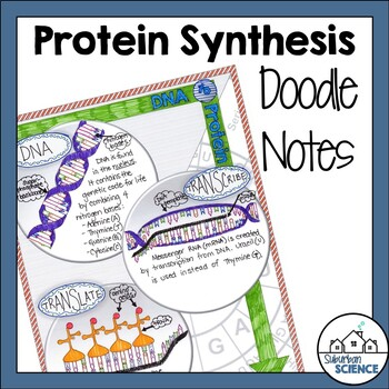 Protein Synthesis Doodle Notes or Interactive Notebook