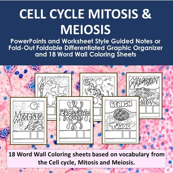 Cell Cycle, Mitosis & Meiosis PowerPoints, Graphic Organizers & Word Wall Sheets