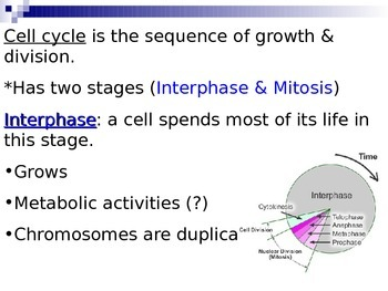 Cell Cycle: Mitosis Power Point