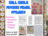 Cell Cycle Mitosis Project - Directions, Rubric, Examples