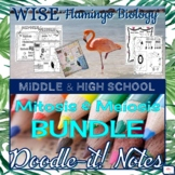 Cell Cycle Mitosis and Meiosis Doodle-it! Notes BUNDLE