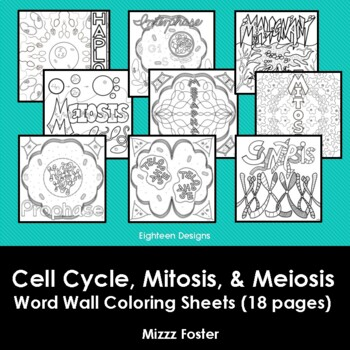 Cell Cycle, Mitosis and Meiosis Word Wall Coloring Sheet Bundle (18 pages)