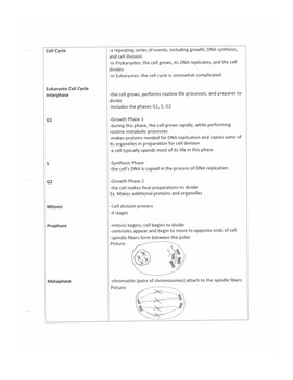 Cell Cycle Notes Ouline