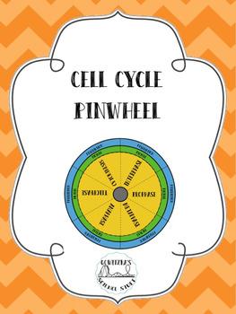 Cell Cycle Pinwheel