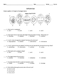 Cell Cycle Quiz