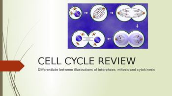 Cell Cycle Review Powerpoint