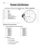 Cell Cycle Test