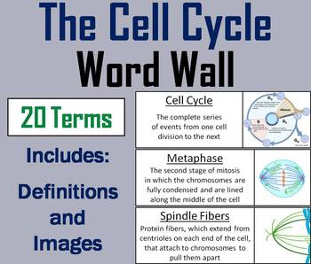 Cell Cycle Word Wall Cards