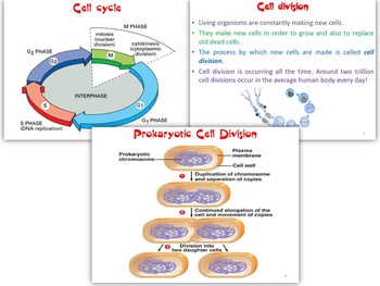 Cell Cycle and Cell Division