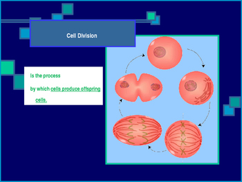 Cell Cycle and Division