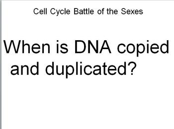 Cell Cycle and Mitosis Battle of the Sexes