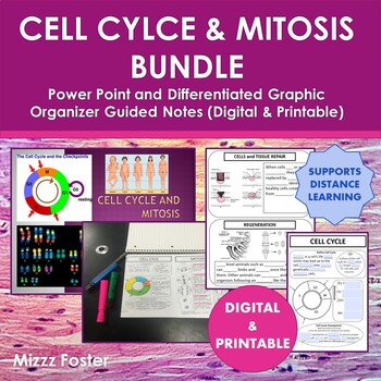 Cell Cycle and Mitosis Bundle: Power Point and Differentiated Graphic Organizer