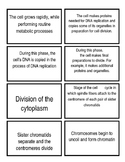 Cell Cycle and Mitosis Flash Cards (5A)