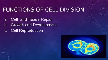 Cell Cycle and Mitosis PowerPoint