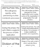 Cell Cycle and Mitosis Review Activity (5A)