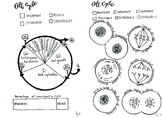 Cell Cycle and Mitosis coloring sheet