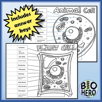 Cell Diagrams InterActive Notebook Study Tool