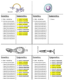 Cell Differentiation Analogy Activity