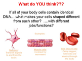 Cell Differentiation PPT