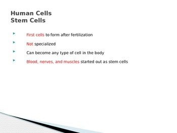 Cell Differentiation Power Point