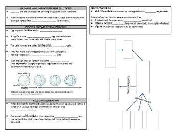 Cell Differentiation and the Levels of Organization Guided Notes