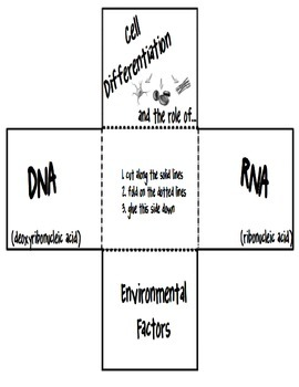 Cell Differentiation and the Role of DNA, RNA and Environmental Factors