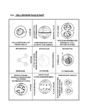 Cell Division: 9 Square Puzzle Card Sort EASY