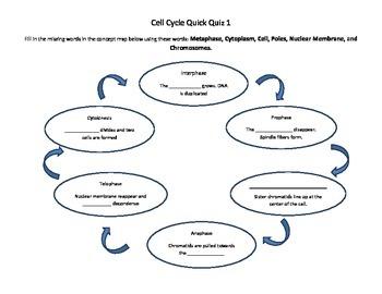 Cell Division Bundle
