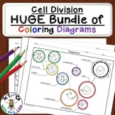 Cell Division Bundle of Coloring Pages and Activities for High School Biology