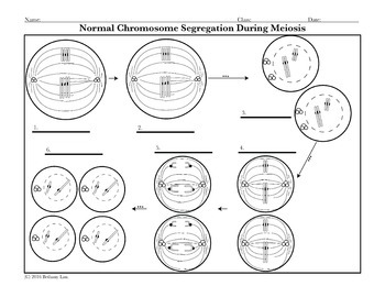 cell division bundle of coloring pages and activities for