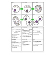 Cell Division Diagram and Explanation of Stages Flash Cards