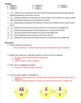 Cell Division: Meiosis Test, Review Questions, and Answer Keys