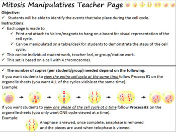 Cell Division: Mitosis Manipulative Activity