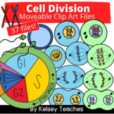 Cell Division Mitosis Meiosis Bio Clip Art | Clipart Moveable Pieces for Digital