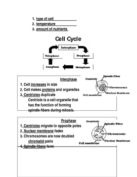 Cell Division & Mitosis Notes Word Document