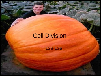 Cell Division Mitosis PowerPoint Presentation