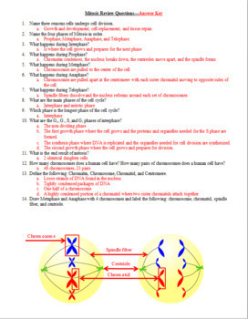 Cell Division: Mitosis Test, Review Questions, and Answer Keys