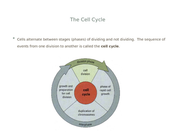 Cell Division PowerPoint