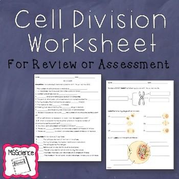 Cell Division Worksheet