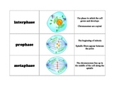 Cell Division and Mitosis Card Sort