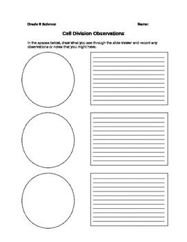 Cell Divison Observation Worksheet