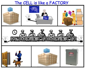 Cell Factory Analogy - Lesson Presentations, Activities, Skeleton Notes