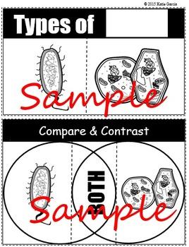 Prokaryote vs Eukaryote & Animal vs. Plant Cell Foldables