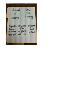Cell Folder Project- animal cell- plant cell