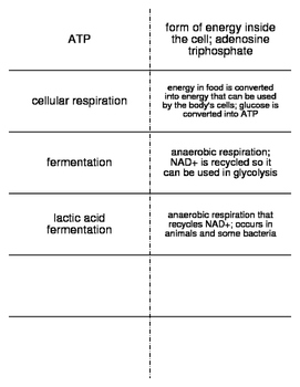 Cell Functions Vocabulary Flash Cards for Middle School Science